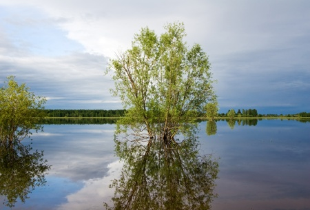 Bushes and trees, reflected in quiet water of lake. Panoramic wide view. Stock Photo - 17766617