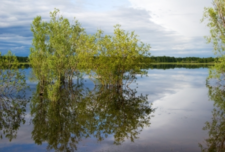 Trees  reflected in quiet water of lake. Panoramic wide view. Stock Photo - 17766624