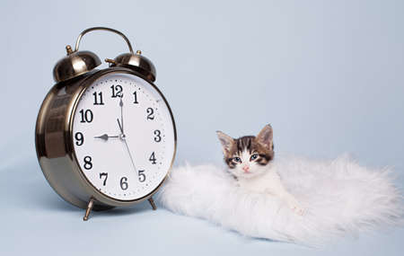 time to get up for cue little kitten on blue background photo