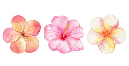watercolor orange tropical flowers set isolated on white background. Plumeria and pink hibiscus collection