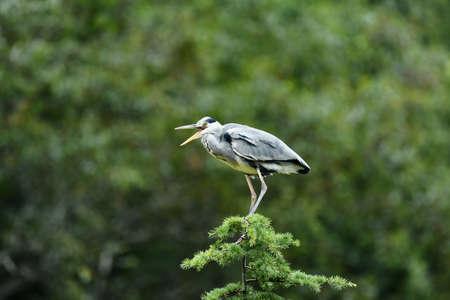 Heron tree Stock Photo