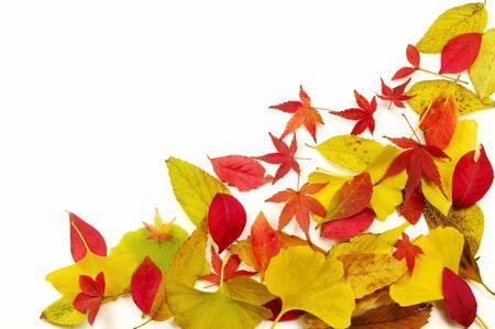 葉の白い背景