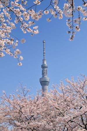 The Tokyo sky tree Banco de Imagens