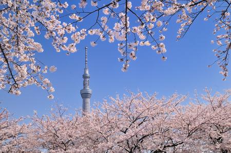 The Tokyo sky tree Archivio Fotografico