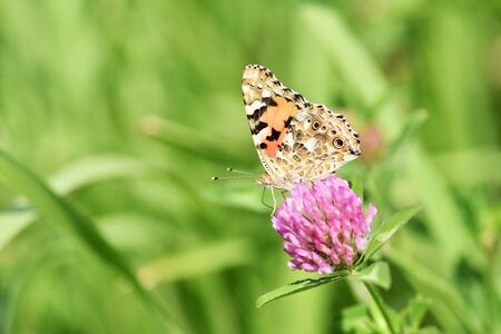 Tata Butterfly