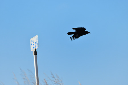 Crow flies away from the sign Stock Photo