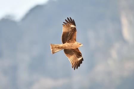 Kite flying Фото со стока