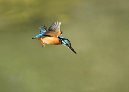 Kingfishers to dive Imagens