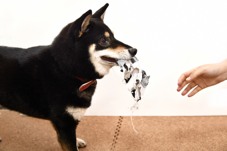 The Naughty Dog against a white background with a hand