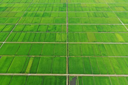 Rice fields in Niigata Prefecture 写真素材