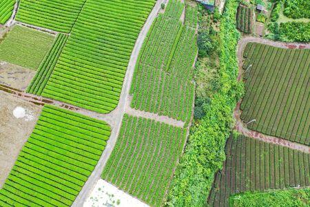 Aerial photographs of tea fields 写真素材