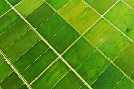 Rural Landscape in Niigata Prefecture 版權商用圖片
