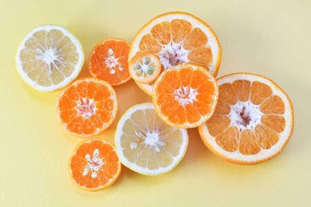 Cut citrus cross section