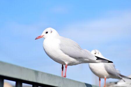 Balustrade seagull
