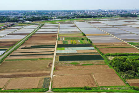 Aerial shot of rice field before rice planting