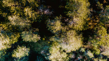 Aerial view of trees with a camera directed at the tips of the trees, willow, spruce