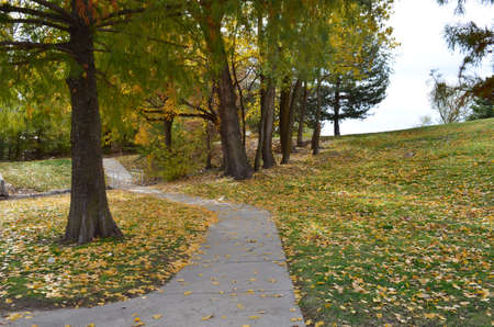 Fall Pad