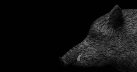 Wild boar on a black background Standard-Bild