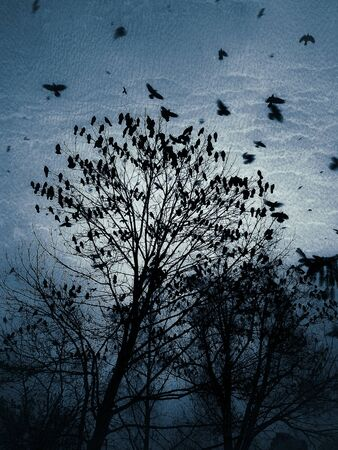 A flock of crows on a tree at dusk in blue dark colors
