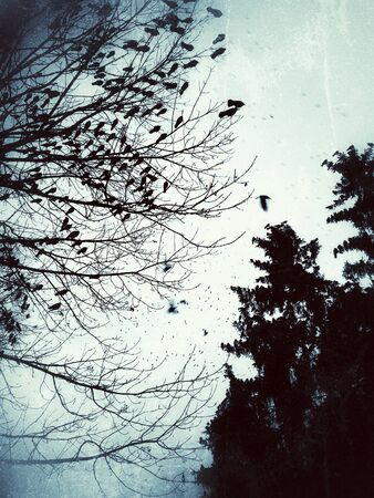 A flock of crows on a tree at dusk in grey dark colors