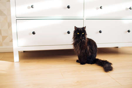 Cute fluffy black cat with big yellow eyes sits on the floor in the room. Funny expression on its face.