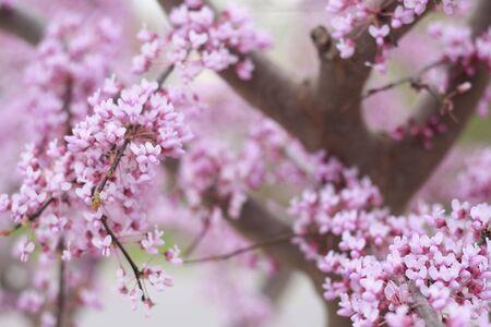 sprung: Pink flowers sprung in Spring Stock Photo