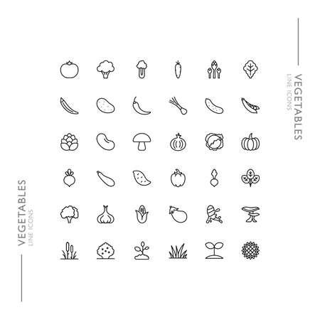 Vegetables and Fresh Food Minimalistic Slim Modern Line Icons