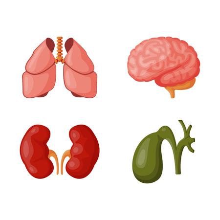 esofago: Los órganos internos ilustración vectorial. Foto de archivo