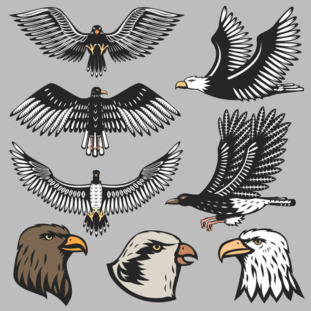 eagle: Eagle illustration. Illustration