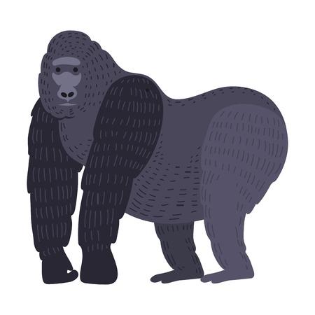 Gorila monkey rare animal vector. 向量圖像
