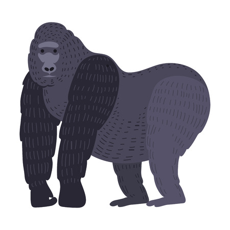 gorila: Gorila monkey rare animal vector. Illustration