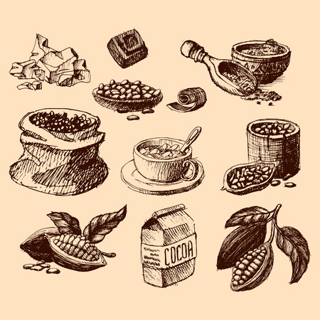 Vector cocoa hand drawn sketch. Doodle food chocolate sweet illustration. Vintage style plant natural bean ingredient. Organic cacao tropical menu symbol.  イラスト・ベクター素材