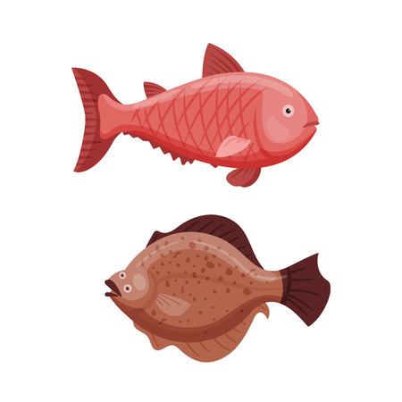 Grouper and cod fish vector illustration.