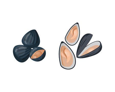 新鮮なムール貝のベクトル図です。