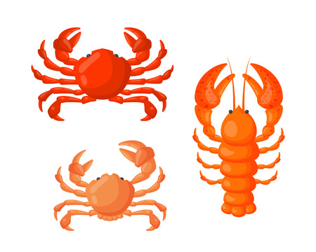 expensive food: Lobster and crab vector flat illustration.