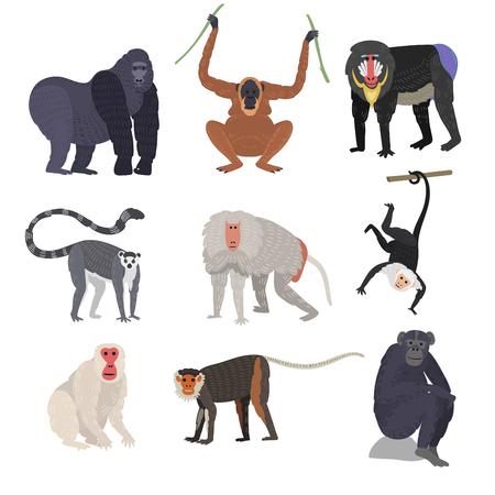Different types of monkeys rare animal vector set.