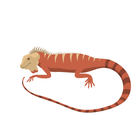 Iguana lizard reptile isolated vector illustration.