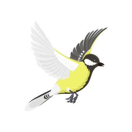parus: Titmouse bird isolated on white nature wild vector illustration.