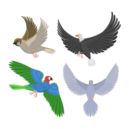 flocks: Set of different flying birds vector illustration.