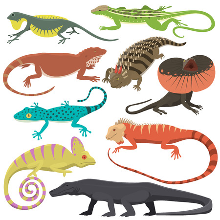 Different kind of lizard reptile isolated vector illustration.