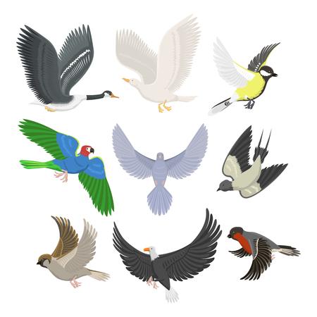 Set van verschillende vliegende vogels vectorillustratie. Stock Illustratie
