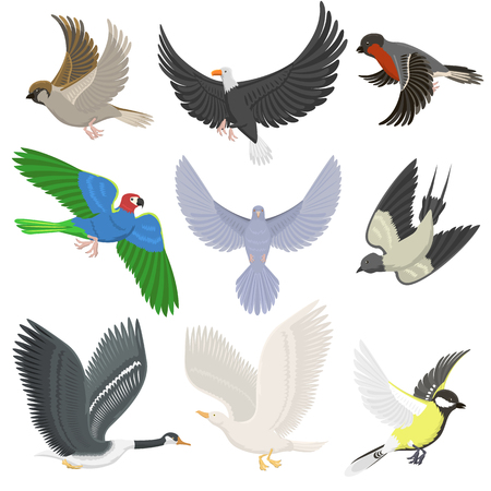 Ensemble de différents oiseaux volants sauvages dessin animé mignon faune plume silhouette animale de vol. Illustration vectorielle de printemps liberté concept naturel. Banque d'images - 72105980