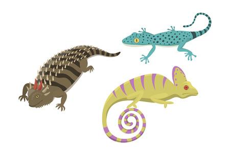 다른 종류의 도마뱀 파충류 격리 된 벡터 일러스트 레이 션.