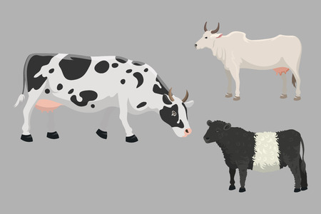buey: Set of bulls and cows farm animal vector illustration. Cattle mammal nature beef agriculture. Domestic rural bovine horned cartoon buffalo.