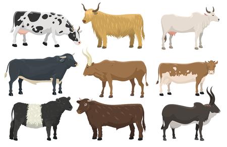 황소와 암소의 집합 농장 동물, 소, 포유류, 쇠고기, 농업, 국내, 시골, 소, 발톱, 캐릭터, 벡터, 일러스트 레이션, 농업 목초지 농업 경적 디자인. 일러스트