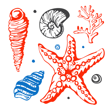 cockleshell: Sea marine shells hand drawn sketch vector illustration.