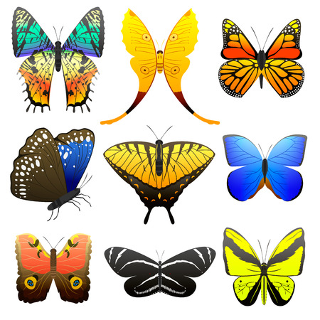 Different butterfly with abstract decorative pattern graphic summer free fly present silhouette and beauty nature spring insect decoration vector illustration. Illustration