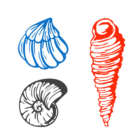 Sea marine shells hand drawn sketch vector illustration.