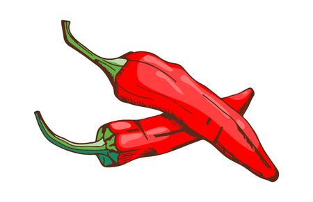 붉은 고추 고추 음식, 양념, 손으로 그린, 스타일, 야채, 재료, 파프리카, 매운, 신선한, 채식주의, 색상, 유기,