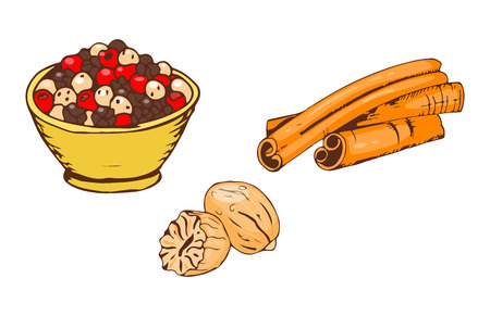 allspice: Colorful spices food herb cooking powder seasoning cuisine and various group cinnamon ingredient pepper spice chili dry curry kitchen vector illustration. Illustration